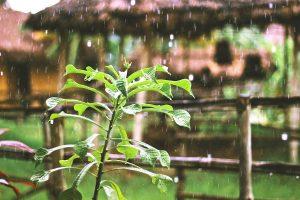 počasie v Indii